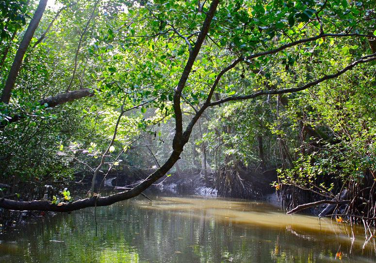 Daintree Rainforest - Attraction in Cairns